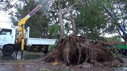 Ảnh hưởng bão số 9, Cần Giờ mưa lớn, cây xanh bật gốc, nhà tốc mái - Ảnh 14.