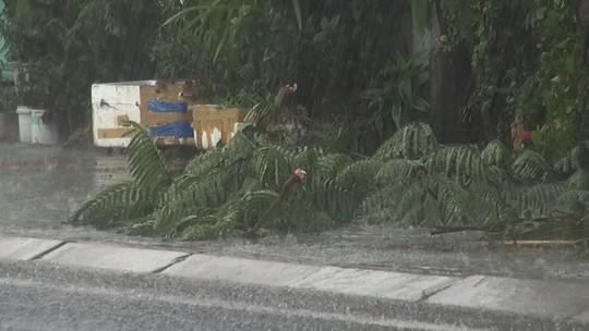 Ảnh hưởng bão số 9, Cần Giờ mưa lớn, cây xanh bật gốc, nhà tốc mái - Ảnh 6.