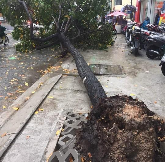 Ảnh hưởng bão số 9: TP HCM mưa lớn, cây gãy đổ đè chết người đi đường - Ảnh 1.