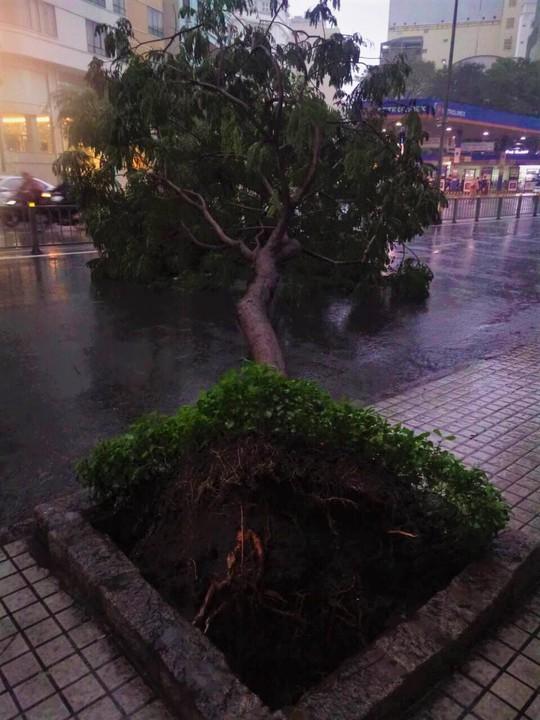 Ảnh hưởng bão số 9: TP HCM mưa lớn, cây gãy đổ đè chết người đi đường - Ảnh 2.