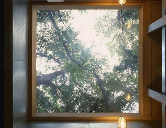 Biệt thự 60 năm giữa rừng gây choáng vì đẹp và hiện đại - Ảnh 14.