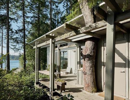 Biệt thự 60 năm giữa rừng gây choáng vì đẹp và hiện đại - Ảnh 4.