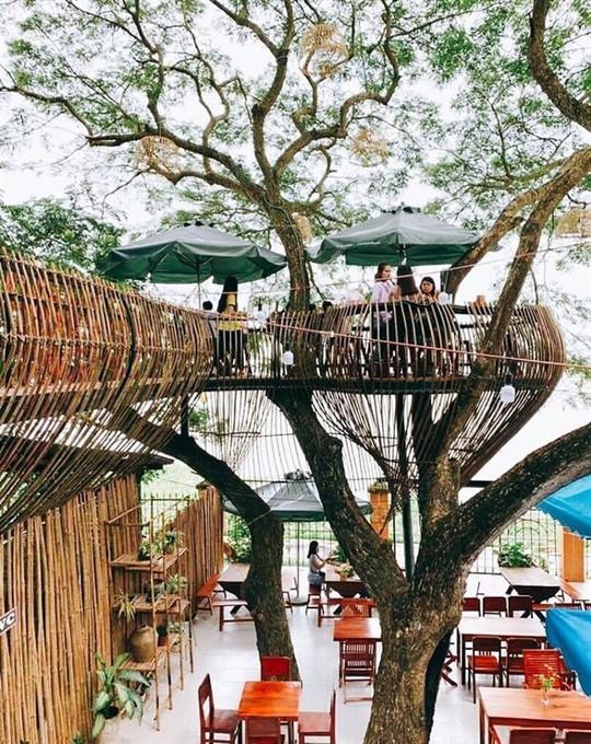 Sống ảo trong tiệm cà phê trên cây ở Cần Thơ - Ảnh 2.