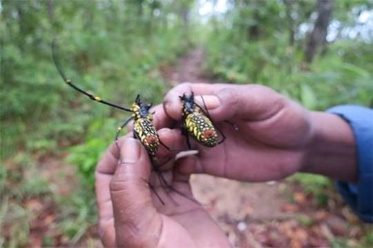 Rùng mình món nhện rừng đặc sản ở Bình Thuận - Ảnh 3.