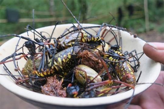 Rùng mình món nhện rừng đặc sản ở Bình Thuận - Ảnh 1.