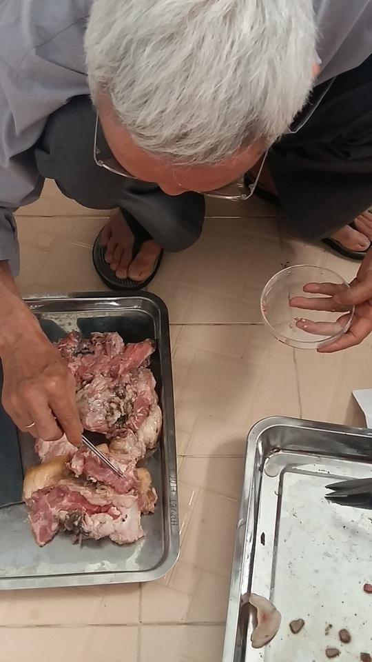 Ớn lạnh với ổ sán lợn vừa phát hiện tại Bình Phước - Ảnh 3.