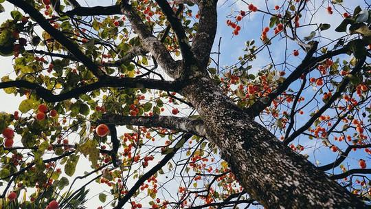 Ngắm vườn hồng trĩu quả giữa trời thu Đà Lạt - Ảnh 2.