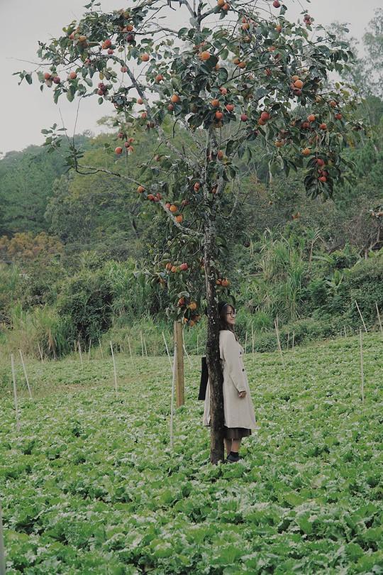 Ngắm vườn hồng trĩu quả giữa trời thu Đà Lạt - Ảnh 6.
