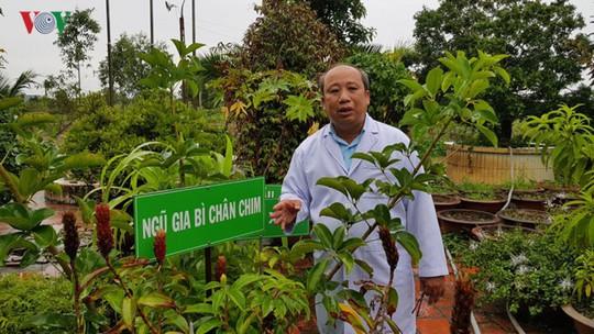Khám phá du lịch sinh thái kết hợp chữa bệnh ở Long An - Ảnh 8.