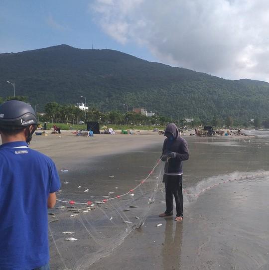 Ngợp với cảnh đầy ắp cá đối áp sát bờ biển Đà Nẵng - Ảnh 2.