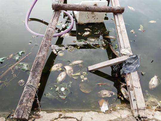 Hiện tượng lạ đang xảy ra ở hồ nước lớn nhất Vũng Tàu - Ảnh 2.