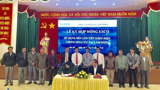 Phát động chương trình hỗ trợ nông dân tiết kiệm điện trong chong đèn hoa cúc tại Lâm Đồng - Ảnh 2.
