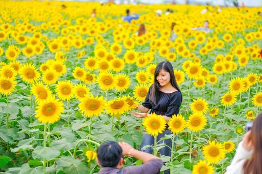[VIDEO] - Nườm nượp đi xem cánh đồng hoa hướng dương ven sông Sài Gòn - Ảnh 11.