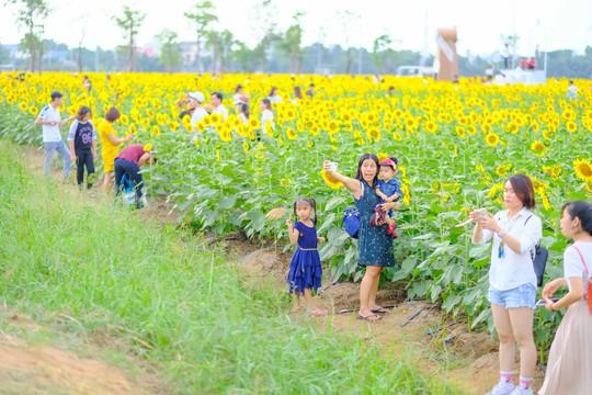 [VIDEO] - Nườm nượp đi xem cánh đồng hoa hướng dương ven sông Sài Gòn - Ảnh 6.