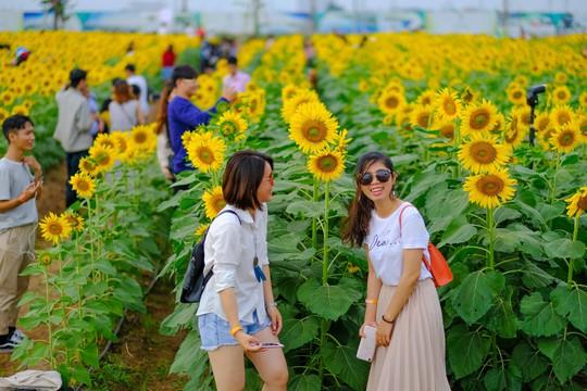[VIDEO] - Nườm nượp đi xem cánh đồng hoa hướng dương ven sông Sài Gòn - Ảnh 12.