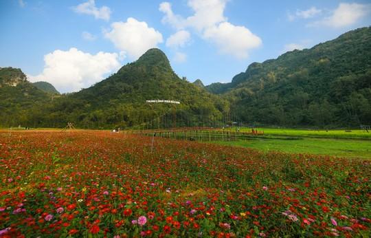 Bên trong thung lũng hoa lớn nhất Việt Nam - Ảnh 1.
