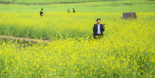 Bên trong thung lũng hoa lớn nhất Việt Nam - Ảnh 2.