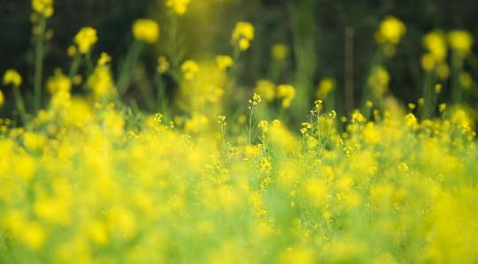 Bên trong thung lũng hoa lớn nhất Việt Nam - Ảnh 3.