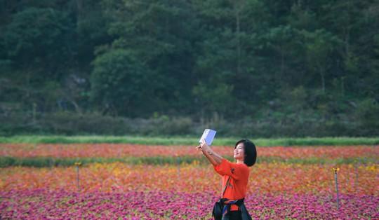 Bên trong thung lũng hoa lớn nhất Việt Nam - Ảnh 4.