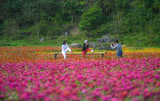 Bên trong thung lũng hoa lớn nhất Việt Nam - Ảnh 6.
