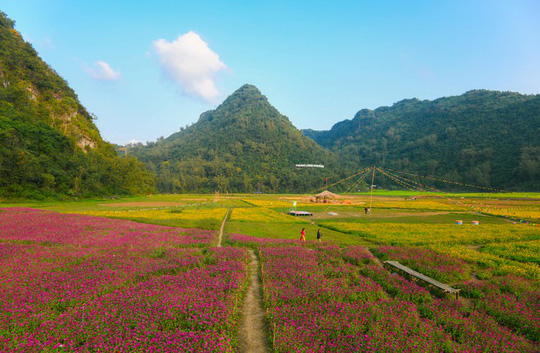 Bên trong thung lũng hoa lớn nhất Việt Nam - Ảnh 7.