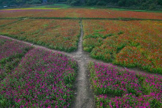 Bên trong thung lũng hoa lớn nhất Việt Nam - Ảnh 8.