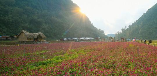Bên trong thung lũng hoa lớn nhất Việt Nam - Ảnh 9.