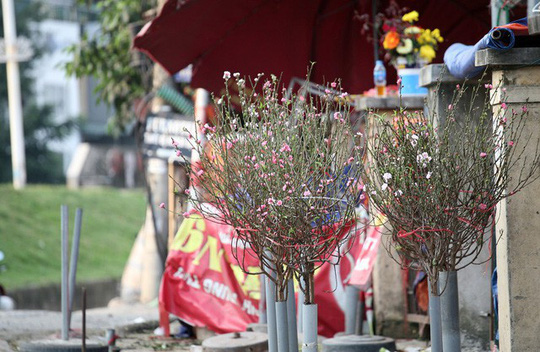 Chuyện lạ: Hoa đào bất ngờ bung nở rầm rộ, giá 200.000 đồng/cành - Ảnh 1.