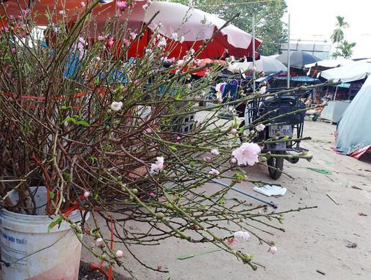 Chuyện lạ: Hoa đào bất ngờ bung nở rầm rộ, giá 200.000 đồng/cành - Ảnh 4.