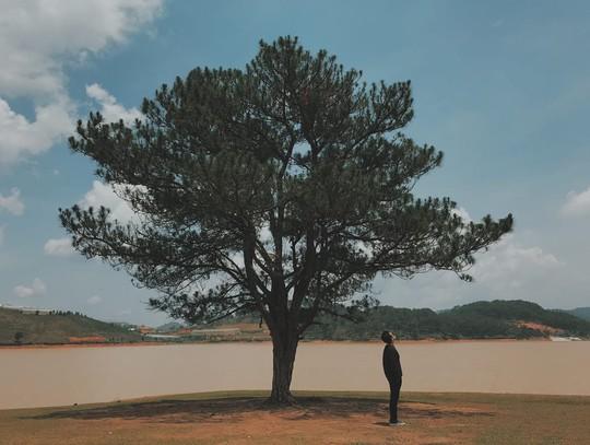 10 cây cô đơn sống ảo của giới trẻ Việt Nam - Ảnh 1.