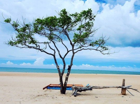 10 cây cô đơn sống ảo của giới trẻ Việt Nam - Ảnh 11.