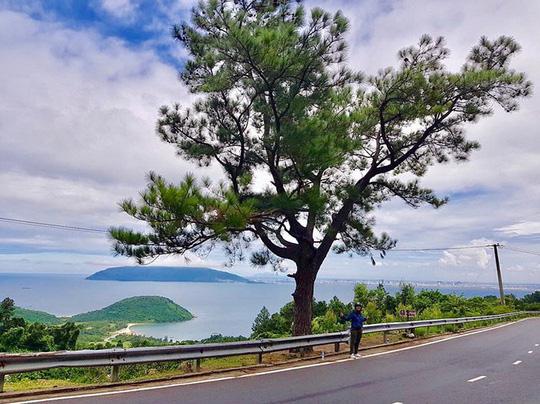 10 cây cô đơn sống ảo của giới trẻ Việt Nam - Ảnh 12.