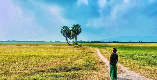10 cây cô đơn sống ảo của giới trẻ Việt Nam - Ảnh 7.