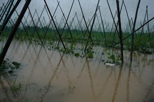 Sau Đà Nẵng, đến lượt nhiều vùng ở Quảng Nam ngập cục bộ - Ảnh 3.