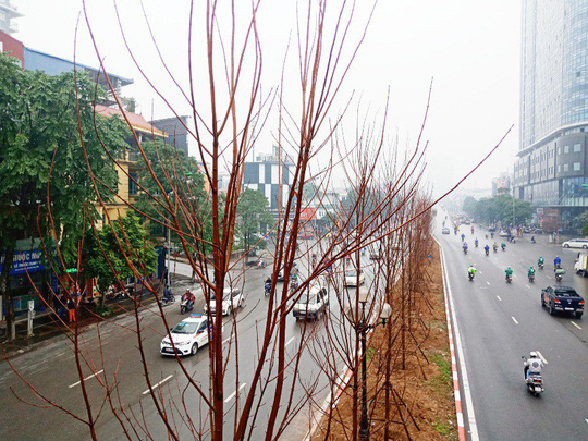 Hàng trăm cây phong lá đỏ được trồng giữa Thủ đô - Ảnh 1.