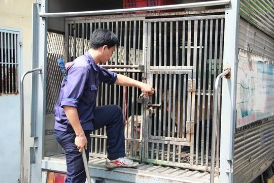 Biệt đội săn chó thả rông ở Sài thành - Ảnh 13.