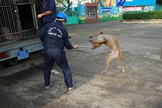 Biệt đội săn chó thả rông ở Sài thành - Ảnh 6.