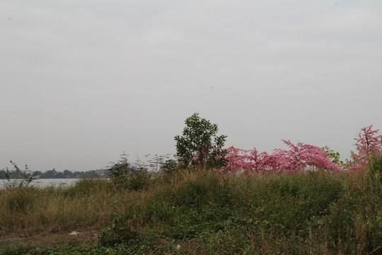 Dự án lấn sông Đồng Nai bây giờ ra sao? - Ảnh 3.