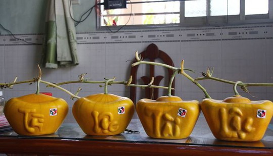 3,5 triệu đồng một trái dưa hấu thỏi vàng chưng Tết - Ảnh 2.