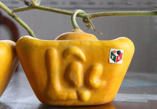 3,5 triệu đồng một trái dưa hấu thỏi vàng chưng Tết - Ảnh 8.