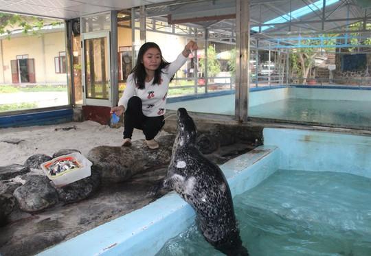 Kỳ công nuôi chó biển ở Nha Trang - Ảnh 1.