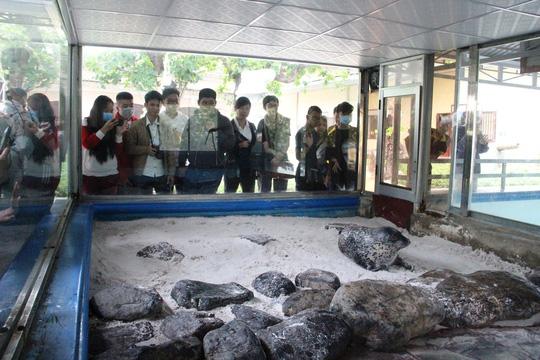 Kỳ công nuôi chó biển ở Nha Trang - Ảnh 5.