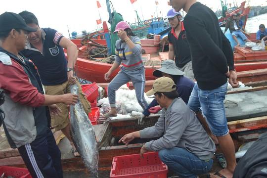 Bội thu mùa cá cuối năm tại ngư trường Hoàng Sa - Ảnh 2.