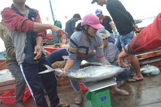 Bội thu mùa cá cuối năm tại ngư trường Hoàng Sa - Ảnh 3.