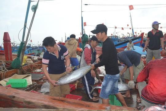 Bội thu mùa cá cuối năm tại ngư trường Hoàng Sa - Ảnh 4.