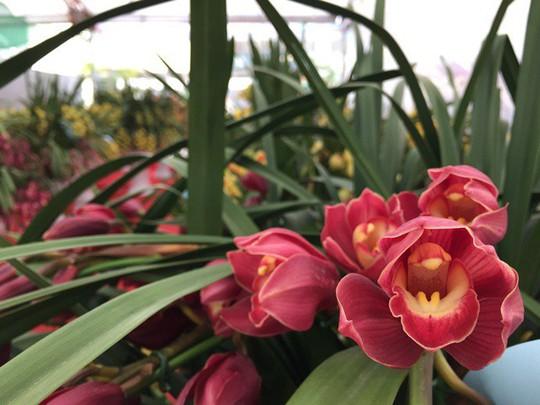 Người Việt đem 82 tỷ đồng mua hoa, cây cảnh Trung Quốc về trưng Tết - Ảnh 1.