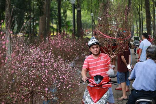 Hoa Tết dội chợ, chất như núi ở chợ hoa sỉ Đầm Sen, TP HCM - Ảnh 19.
