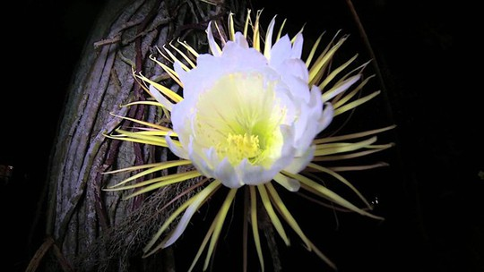 Choáng với giá tiền của 6 loài hoa đắt nhất thế giới - Ảnh 1.