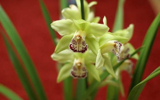 Choáng với giá tiền của 6 loài hoa đắt nhất thế giới - Ảnh 5.