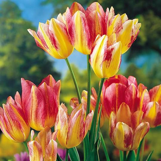 Choáng với giá tiền của 6 loài hoa đắt nhất thế giới - Ảnh 8.